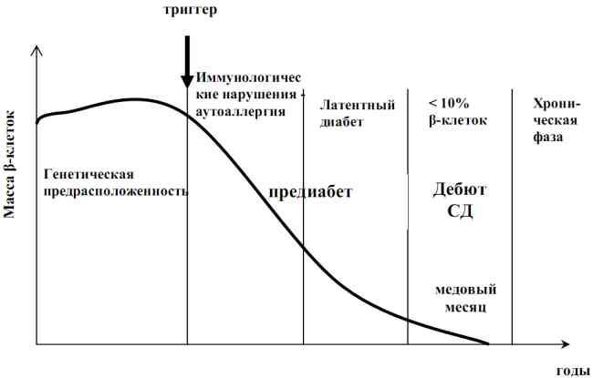 Зависимость фаз СД 1 от состояния пула β-клеток