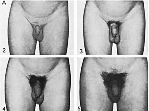 юнные половые органы юноши фото