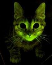 светящаяся кошка